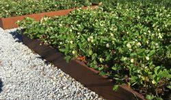 corten-jardiniere-dlv-msv